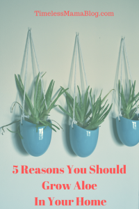 5 Reasons to Grow Your Own Aloe
